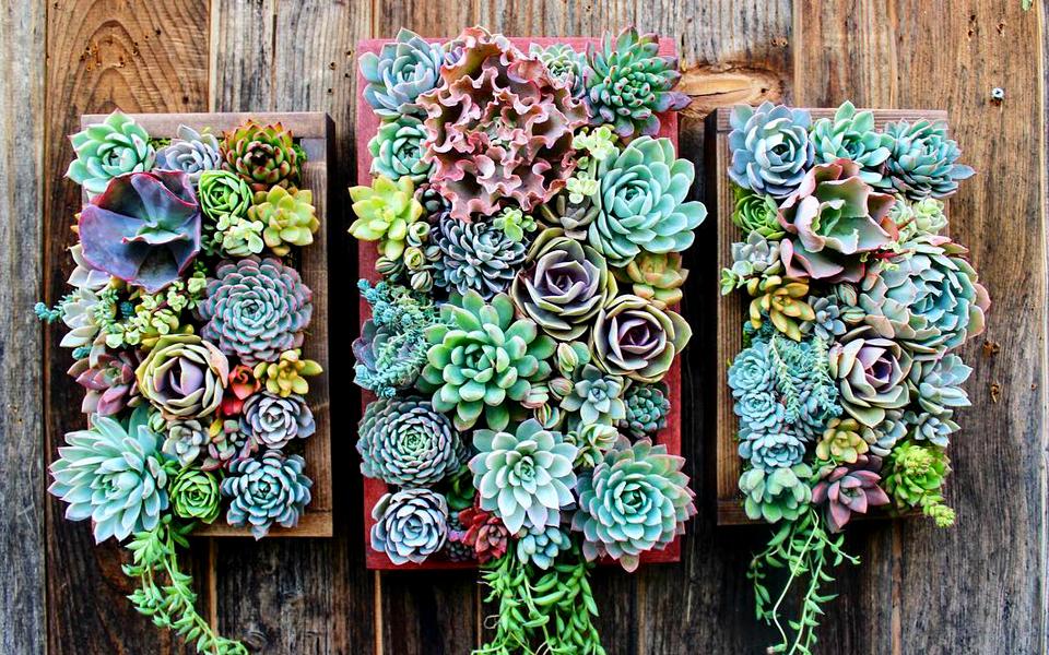 como-hacer-jardin-vertical