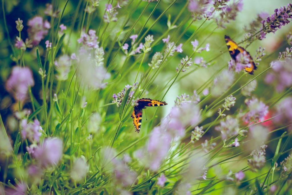 cuidar jardin verano, xerojardin, plantas resisten sol directo, cuidar macetas verano